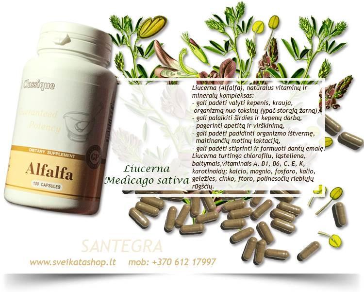 Alfalfa 100 kaps, liucerna – maisto papildas Santegra JAV - PIGIAU