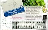 Chlorophyll Forte GP 90 kaps, chlorofilas – maisto papildas Santegra JAV – AKCIJA