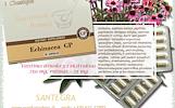 Echinacea GP 30 kaps, ežiuolė IMUNITETUI – maisto papildas Santegra JAV – PIGIAU