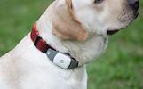 Gyvūnų seklys + GPS seklys