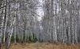 Perka mišką Radviliškio raj. bei visoje Lietuvoje