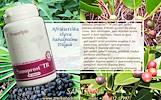 Sanoprost™ TR 60 tabl VYRAMS – maisto papildas Santegra JAV – AKCIJA
