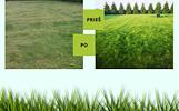 Žolės sėklos vejai,trąša žolei ir laistymo sistema